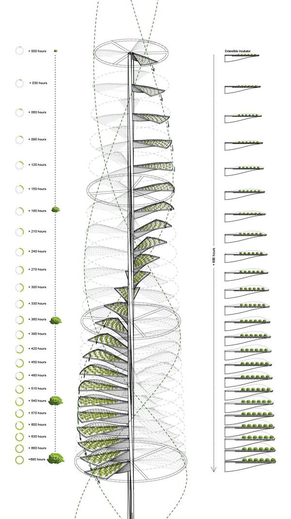 pionowa wieża uprawy warzyw